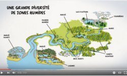 video agence eau zones humides